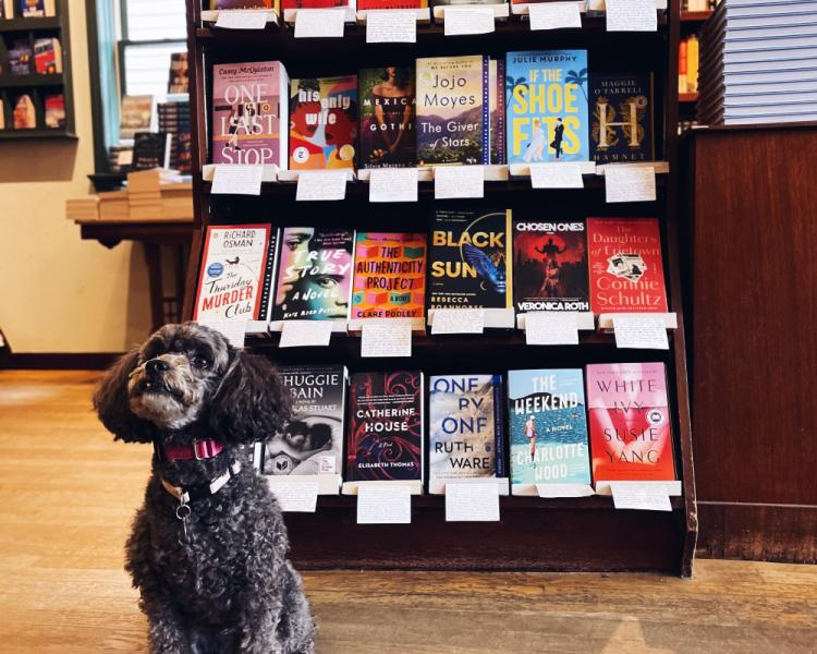 Poodle with paperback books